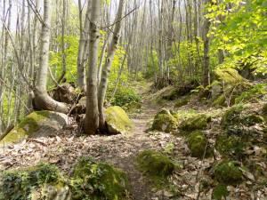 Πιστοποίηση από την ITRA για τη διοργάνωση Sougliani Trail!
